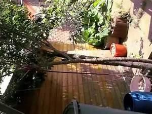 Gewächshaus Bewässerung Mit Regenwasser : tropf bew sserung mit regenwasser youtube ~ Watch28wear.com Haus und Dekorationen