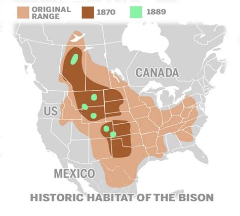 bison to be reintroduced to yellowstone national park for time since 19th century