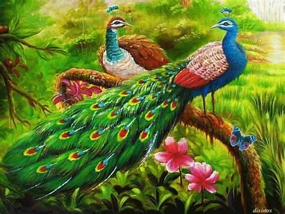 Animated Peacocks Peacock Gifs Lovethispic Animation Bird