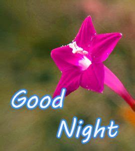 good night images  pink yellow green blue flower