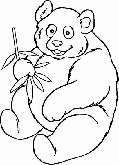 Panda Coloring Bear Pages Printable Clipart Outline