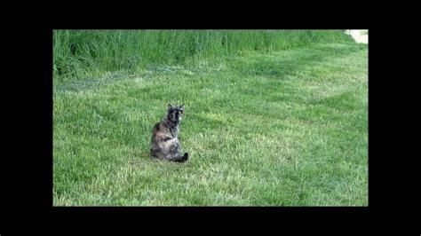 Katze Und Marder