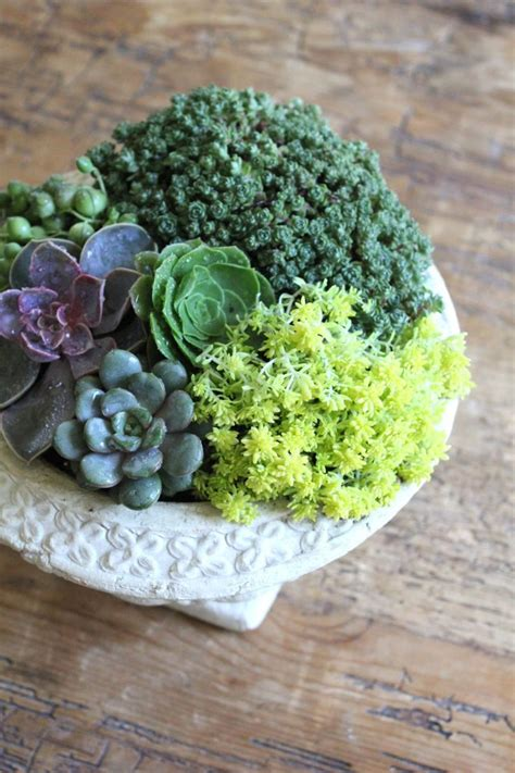 succulent containers succulents containers succulents pinterest