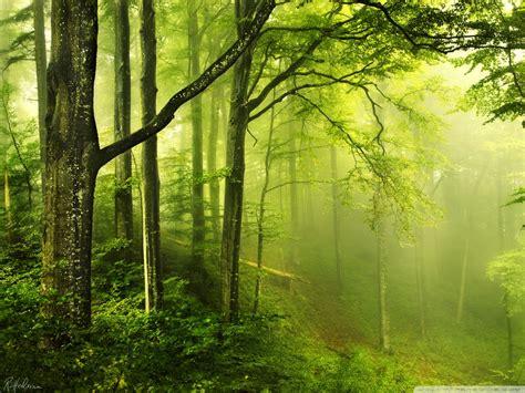 beautiful green forest  hd desktop wallpaper