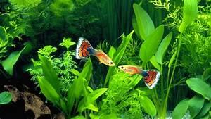 Aquarium Fische Süßwasser Liste : tiere im wasser fische tiere im wasser natur planet wissen ~ Watch28wear.com Haus und Dekorationen