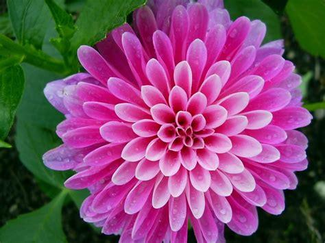 show the picture of flowers g 252 zel rengarenk 199 i 231 ek resimleri laklak sohbet odaları