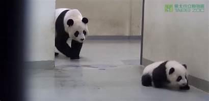 Panda Bed Mama Puts Tiphero Bamboo Ltd