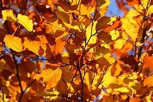 Kostenlose Bilder Herbst : herbst kostenlose bilder auf pixabay ~ Yasmunasinghe.com Haus und Dekorationen