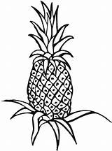 Pineapple Coloring Plant Drawing Outline Clipart Field Line Unripe Printable Panda Clipartmag sketch template