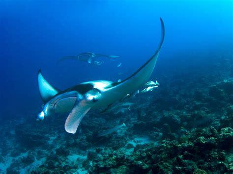 Scuba Dive Trips - diving in maldives scuba dive trips singapore scuba