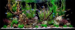 Aquarium Dekorieren Ideen : beratung ~ Bigdaddyawards.com Haus und Dekorationen