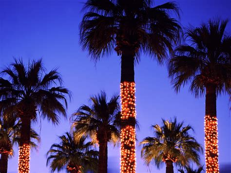 palm tree lights a fabulous los angeles gift guide