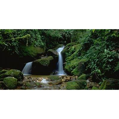 About the Atlantic Forest in BrazilThe Nature Conservancy