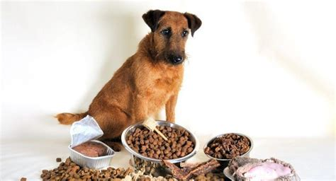 dog food  sensitive stomachs  place  animals