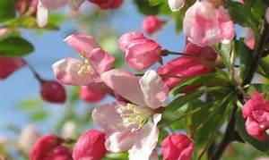 Quand Planter Un Pommier : pommier plantation taille et entretien nos conseils ~ Dallasstarsshop.com Idées de Décoration