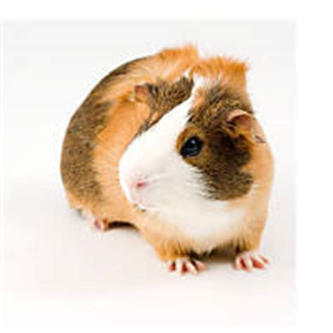 Small Pets & Animals For Sale Small Pet Store Petco