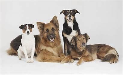 Pets Pasa Slika Pet Discuss Dog Za