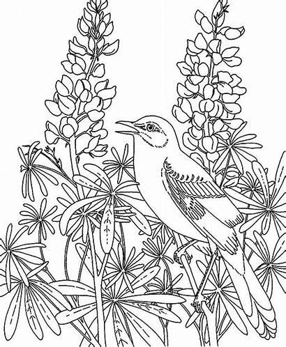 Coloring Garden Pages Flower Mockingbird Printable Rose