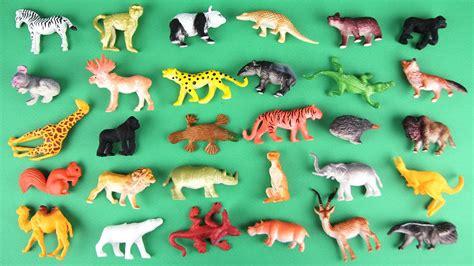 animals learn  kids learning  safari wild animal