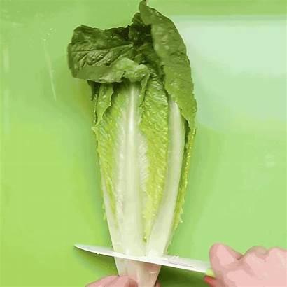 Lettuce Cutting Romaine Vegetables Cut Chop Half