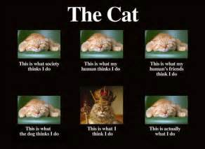 what does it when you about cats what cats actually do imghumour