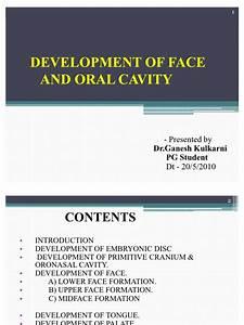 Development Of Face  U0026 Oral Cavity