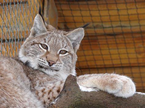 Rīgas Nacionālais zooloģiskais dārzs | Dzīvnieki