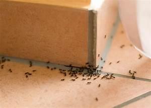 Mittel Gegen Ameisen Im Rasen : tipps gegen ameisen haus mittel gegen ameisen die wirklich helfen ~ Watch28wear.com Haus und Dekorationen