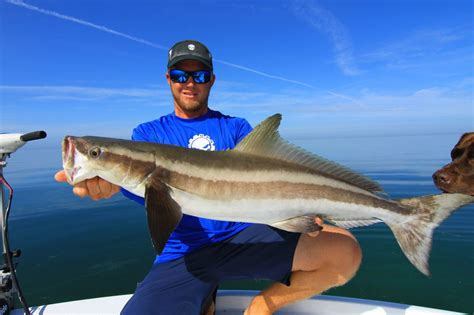 fishing florida cobia keys lures fly saltwater cool uploaded user