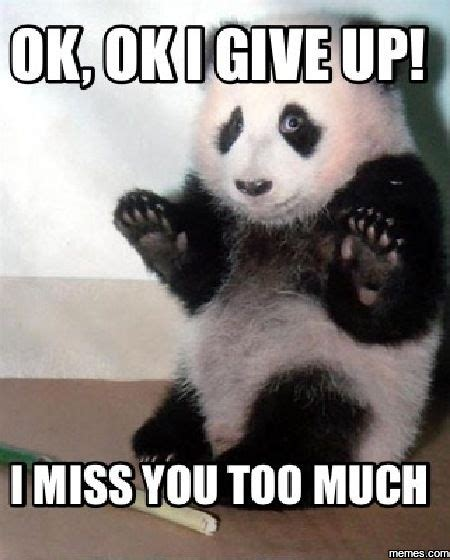 cutest    memes   time quotes panda