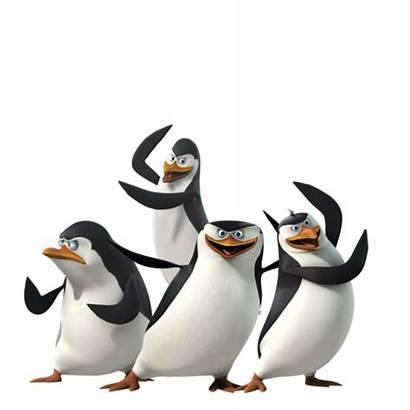 Madagascar Penguins Pngimg
