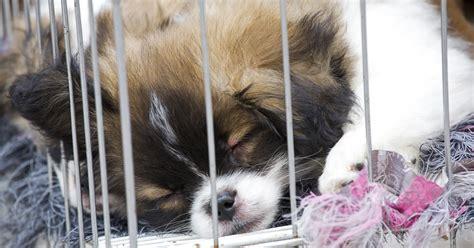 puppies  sale   lease aspca
