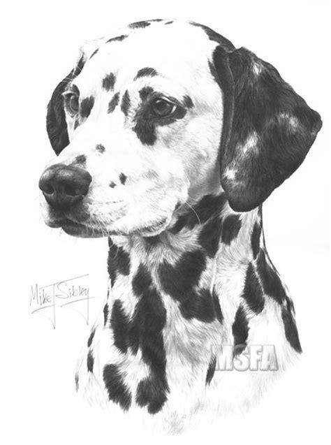 dalmatian fine art dog print  mike sibley