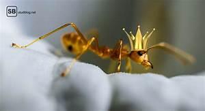 Ameisen Mit Flügel In Der Wohnung : wg geschichten teil 5 180 minuten unter ameisen ~ Orissabook.com Haus und Dekorationen