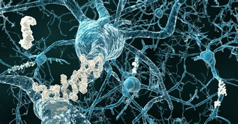 mechanism involving beta amyloid protein linked