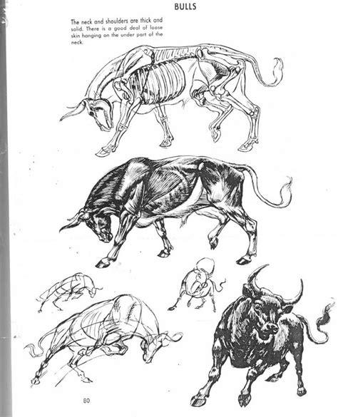images  animal anatomy  pinterest dog