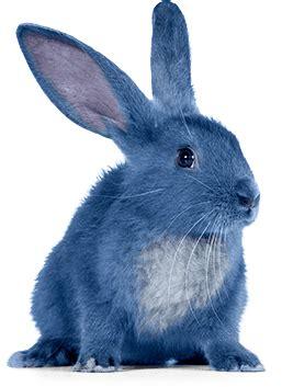 ice cream parlor bar shop blue bunny blue bunny ice