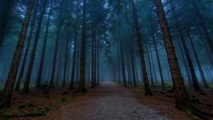 Dark Woods Wallpapers