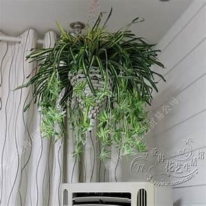 Grande Plante D Intérieur Facile D Entretien : plante d interieur topiwall ~ Premium-room.com Idées de Décoration