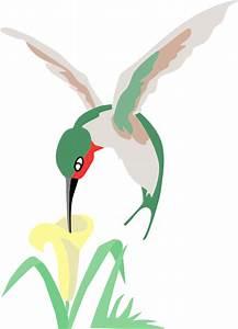 Humming Bird Drawings - ClipArt Best