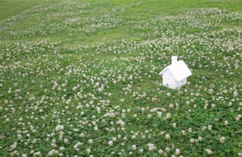 Was Hilft Gegen Klee Im Rasen 5601 by Klee Im Rasen Entfernen Die Besten Methoden