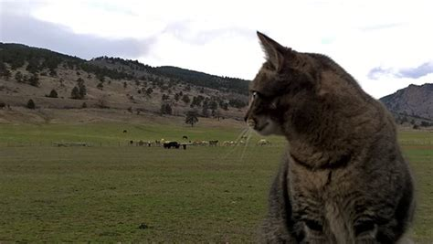 Darley's Travel Blog  Must Love Ranch Cats Cute, Curious