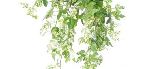 plante exterieur en pot sans entretien plante en pot exterieur sans entretien pivoine etc