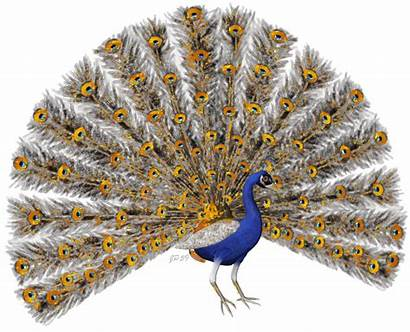 Peacock Oiseaux Gifs Paon Glitter Aves Animated