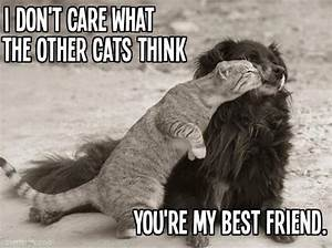 My best friend quotes cute animals friends cat dog ...