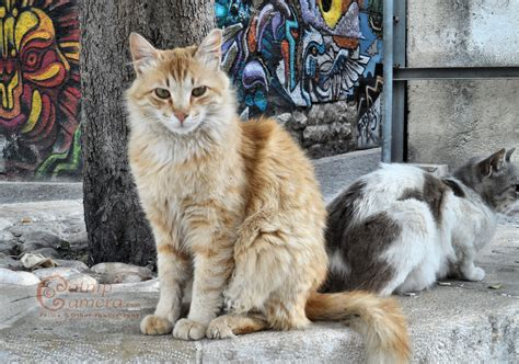 Street Cats of Jerusalem | Catnip Camera