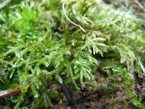 types of moss on trees moss study and a quartz find happily occupied homebodies