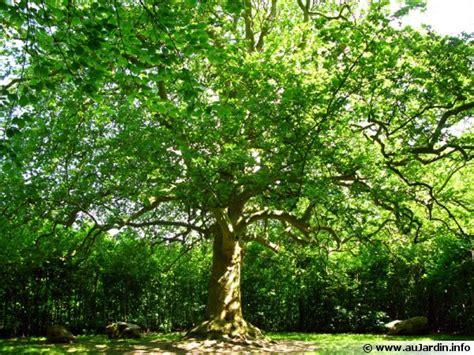 cuisiner les fleurs les bonnes distances de plantation des arbres et des arbustes