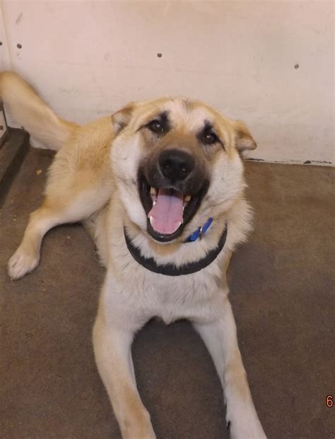 Dogs For Adoption Thompson Regional Humane Society