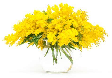 fiori e mimose il galateo dei fiori quello sai e non sai
